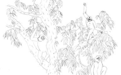 singes-arbre